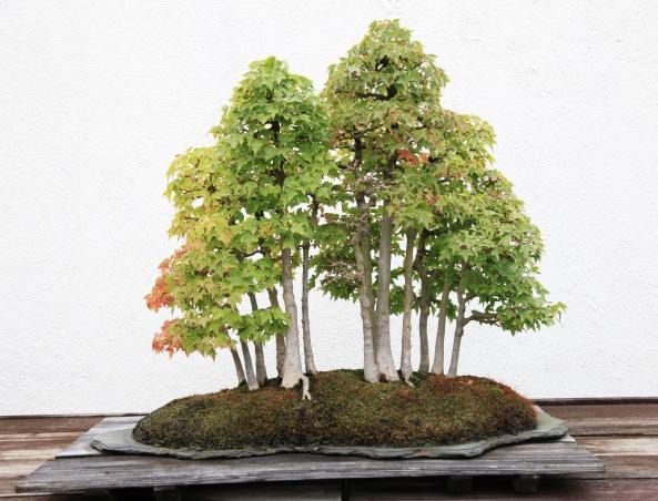 Credit: Dylan Fawcett National bonsai and Penjing Museum D.C.