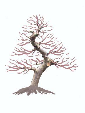 maple-ground-layer-2
